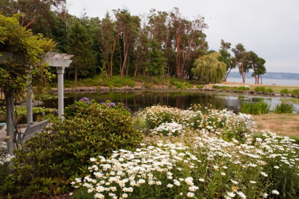 """Vashon Field and Pond is an easy to get to """"destination"""" that is still close to Seattle and Tacoma. View across the pond facing SE in late summer."""