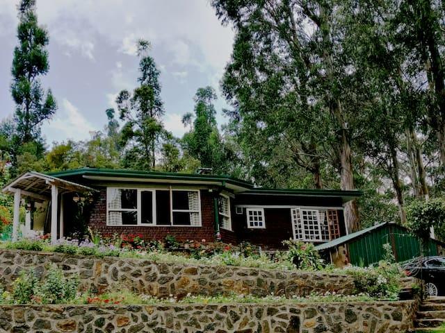 Jacaranda villa ! Beyond imagination