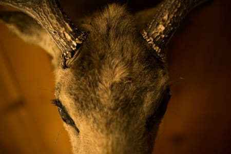 The Laker - Whitney