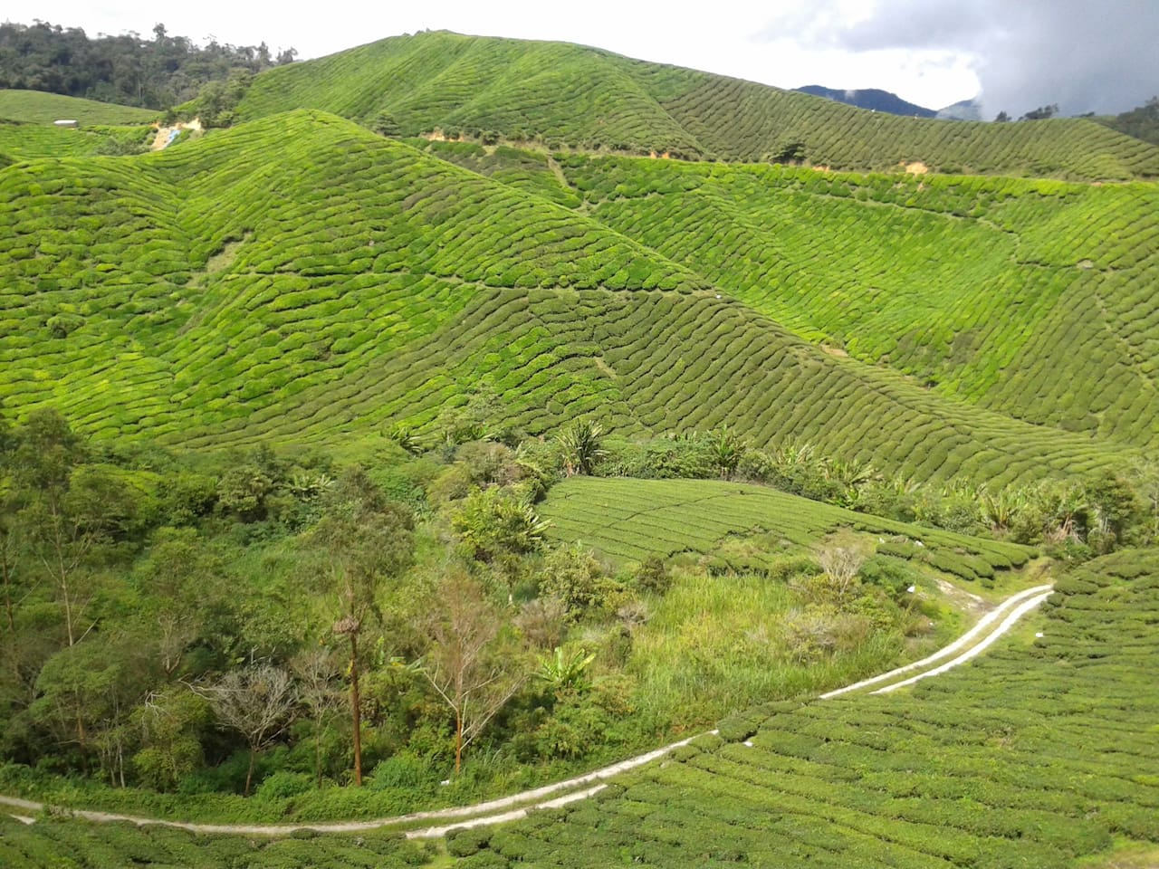 5 minutes by taxi to the nearest tea plantation from the apartment.