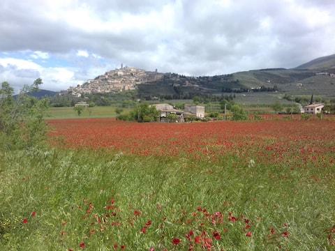 L'Oliveto in Trevi (PG)