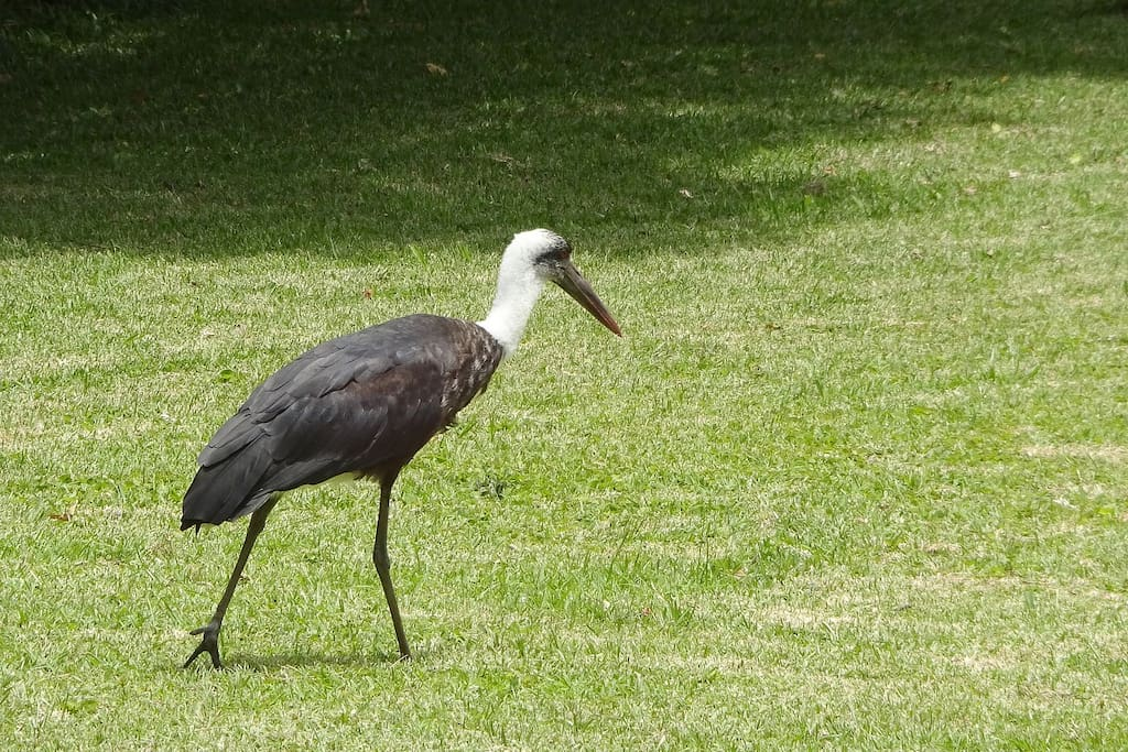 The complex has a rich variety of wildlife, including birdlife and reedbuck