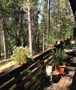 Mama Bear's Cabin - Groveland