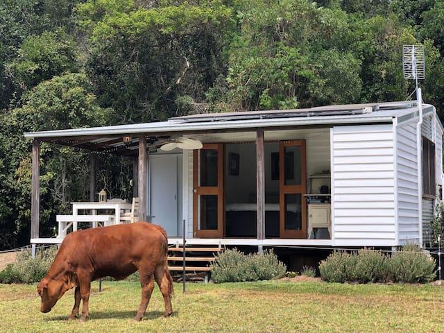 Private Noosa Hinterland cabin (pet friendly)