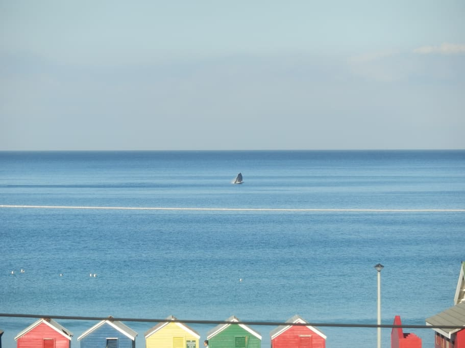 Whale from the window