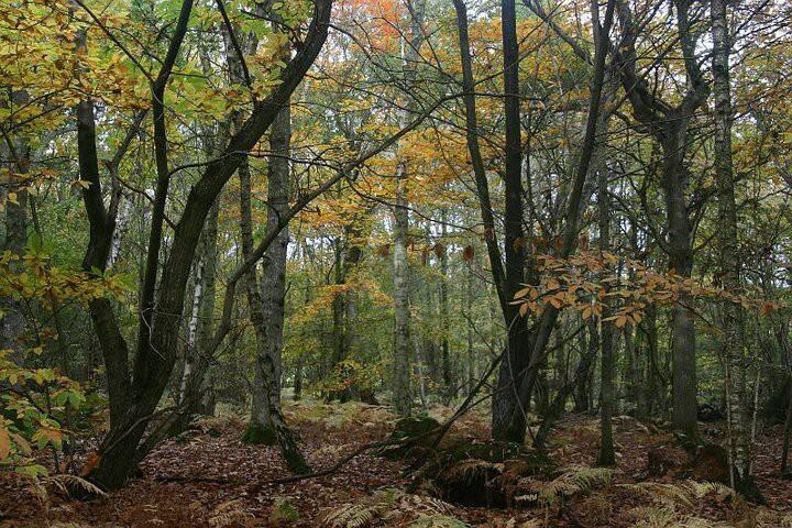 Unique woodland retreat, near Rye