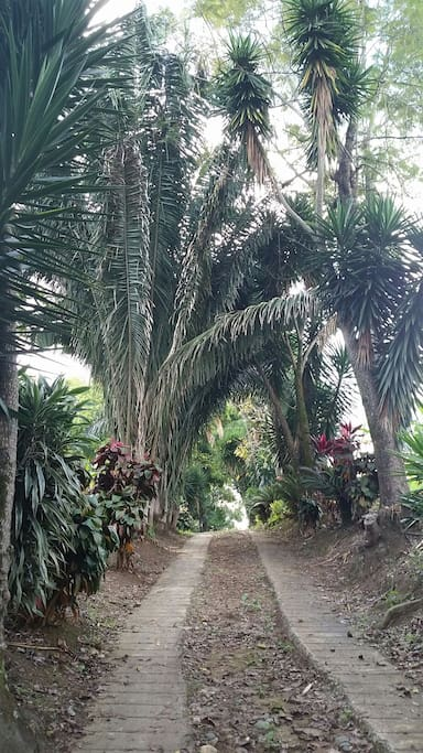 Private driveway & nature path