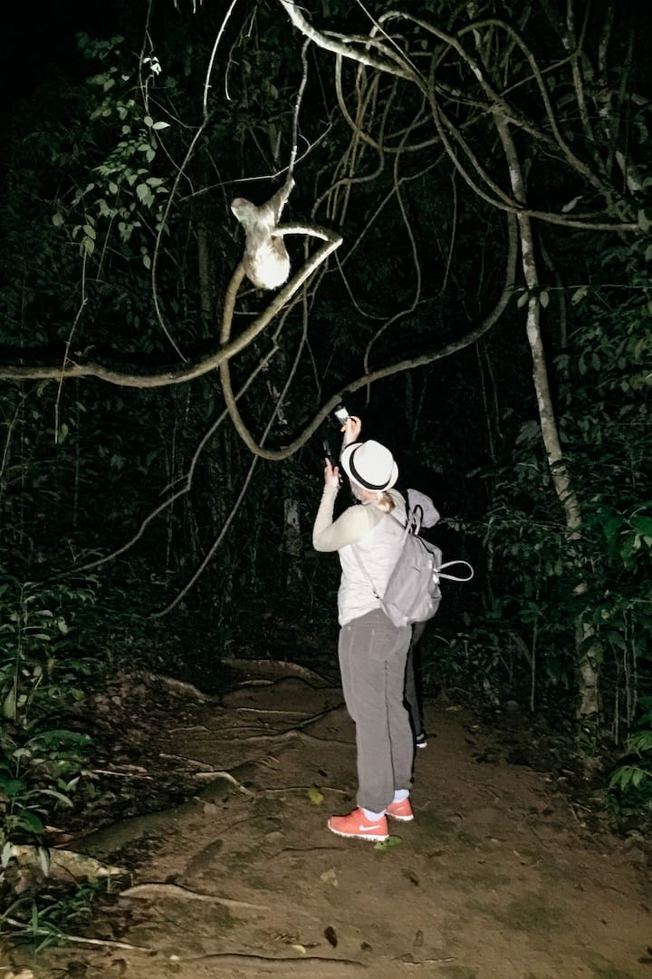 A close two-toed sloth  encounter!