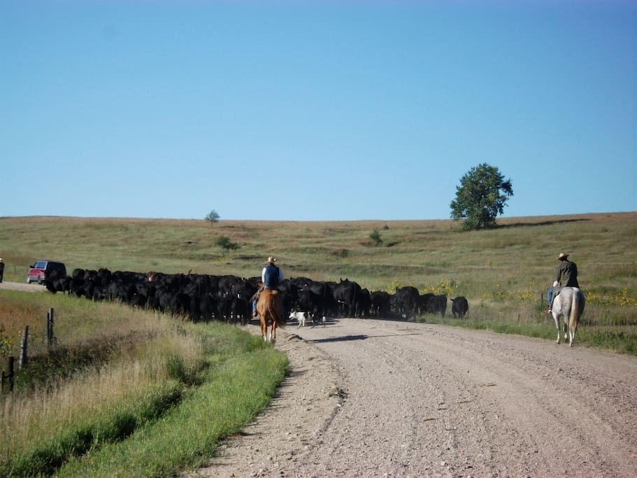Go on a cattle drive.