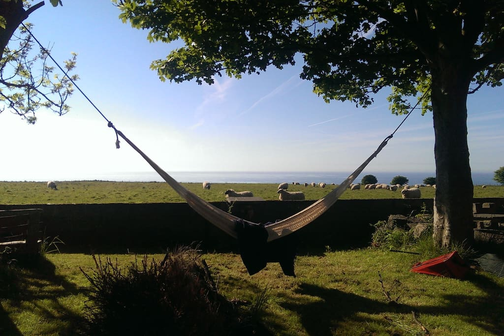 Sheep and dolphin spotting from the hammock