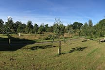 Panoramic view of the garden
