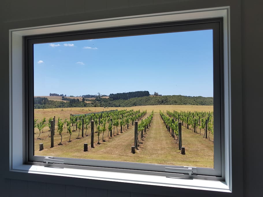 Picturesque view of the vineyard