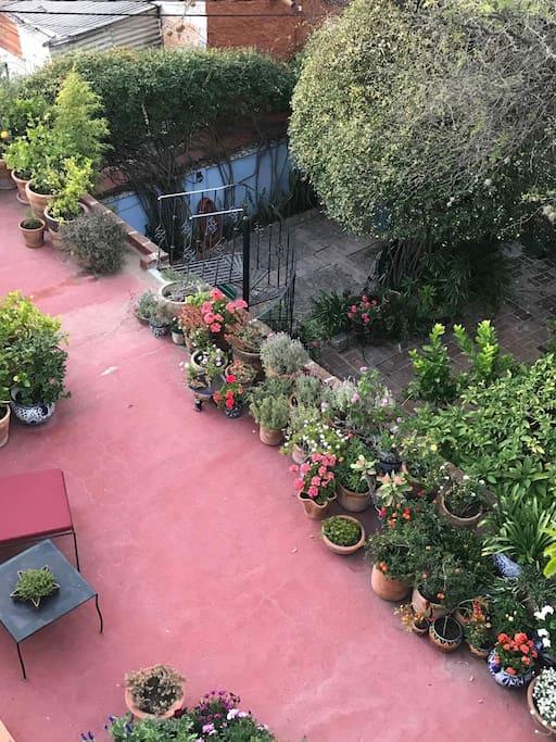 terrace and garden below