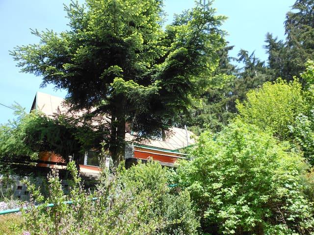 Ubytování U lesa - Suchý Důl - House