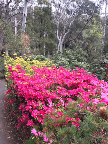 Rhododendrum gardens - in full bloom
