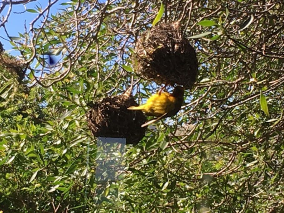 Bird life in our back garden.
