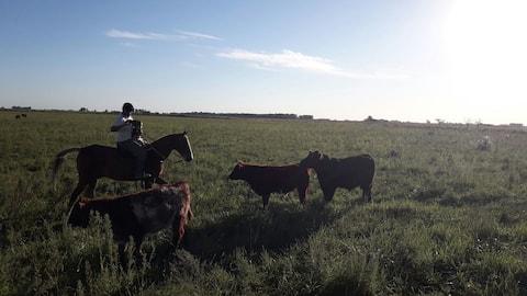 Argentinian family farm
