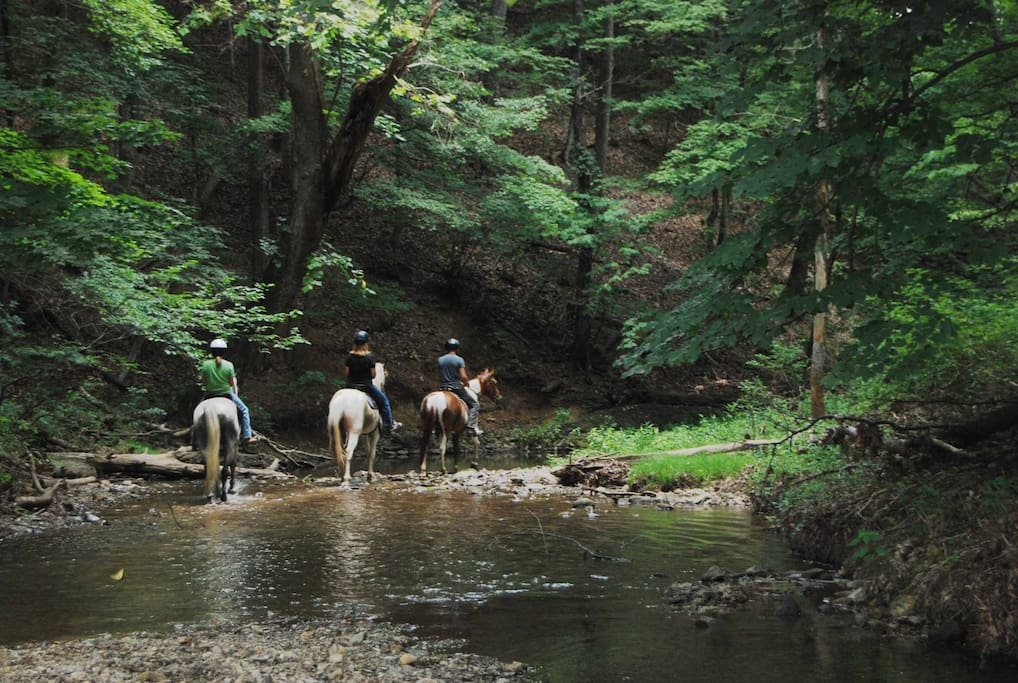 Custom scenic Trail Rides on Tenn Walking Horses and Spotted Saddle Horses.  Some times we have horses for sale.