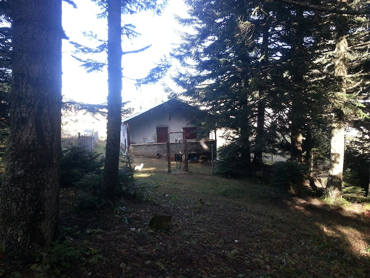 Mountain House in Forest (Dağ Evi)