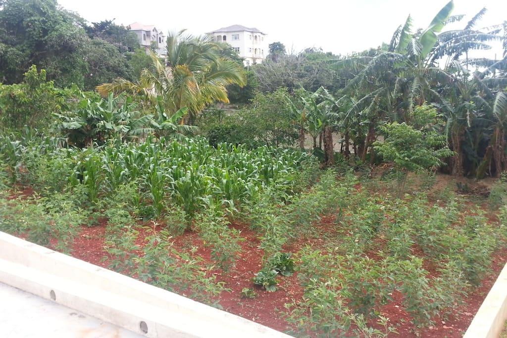 Fruit trees on premises...