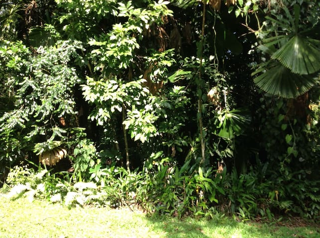 studio in lush rainforest - Whyanbeel - Cabana