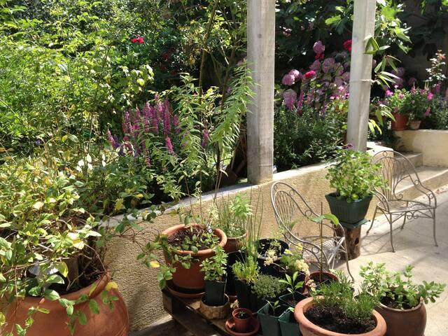 Jardin vue de la tonnelle