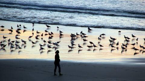 strandrum, Caión Coruña