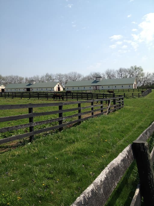 Beautiful Horse-Filled Scenery