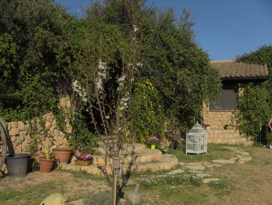 Cerezos, higueras y olivos