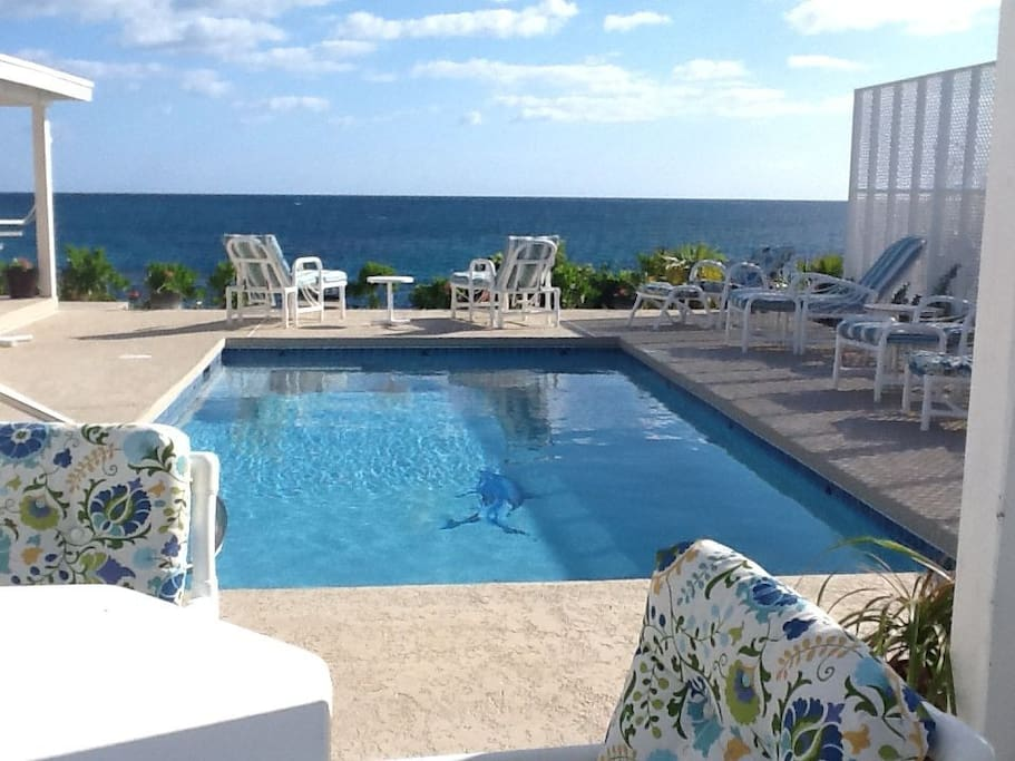 Our salt-water pool and terrace with 50-mile ocean view. Facing east.