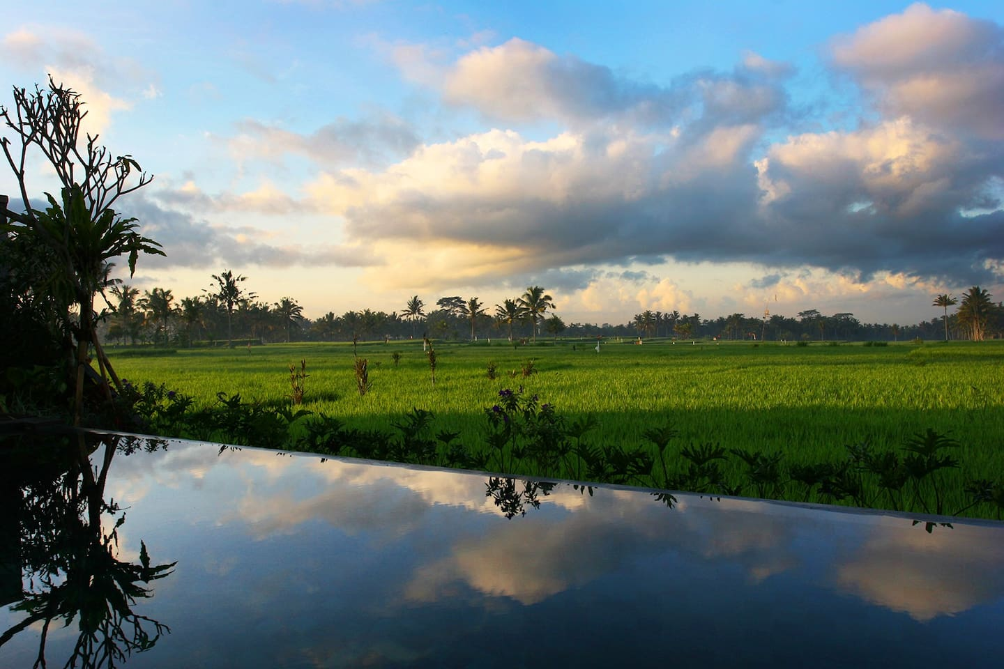 View of Rice Fields over Infinity Pool. Everyone says the pictures don't do the village justice, so just imagine how amazing the villa really is.
