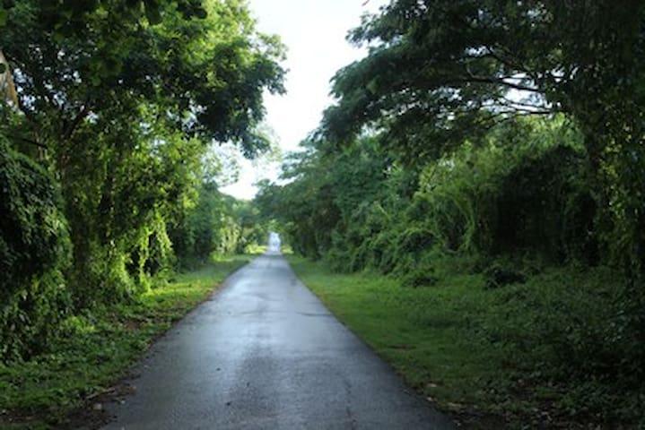 Lush and green vegetation surrounding the island roads.