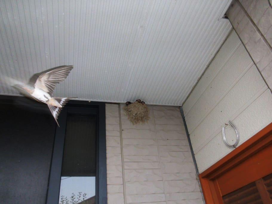 燕も毎年訪れます
