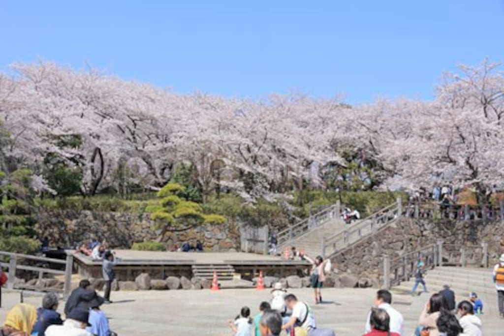Asuka Yama Park (exactly at Oji station) is one of 3 most famous Sakura sightseeing in Tokyo.  飛鳥山公園是東京三大賞櫻名勝,就在王子地鐵站