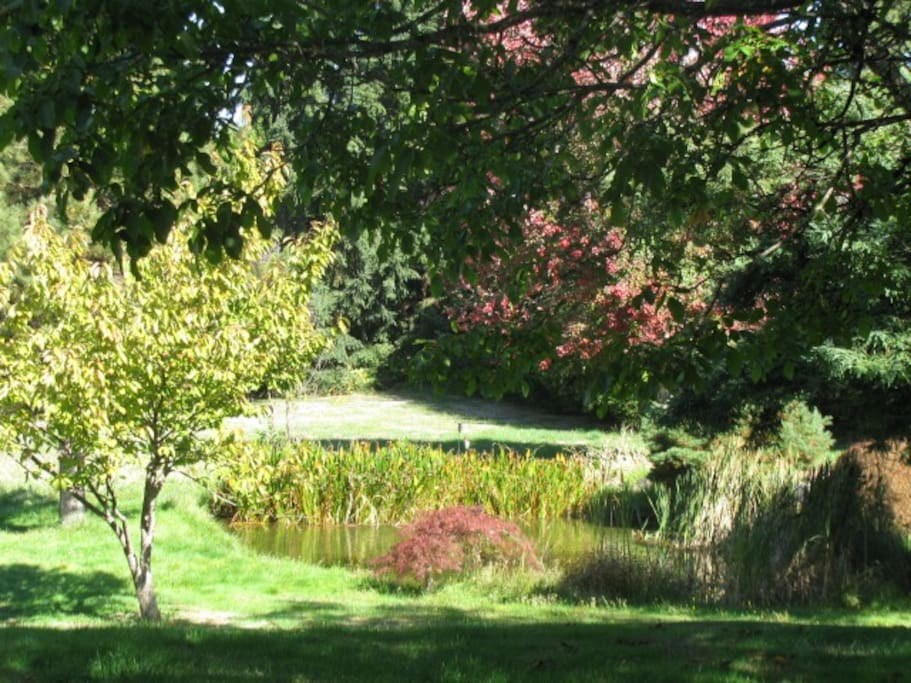 The Acreage in sunshine. A natural pond with frogs and fish.