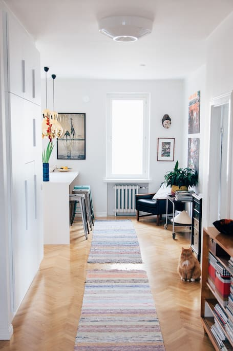 Hall. The cat is not included in the rent :).