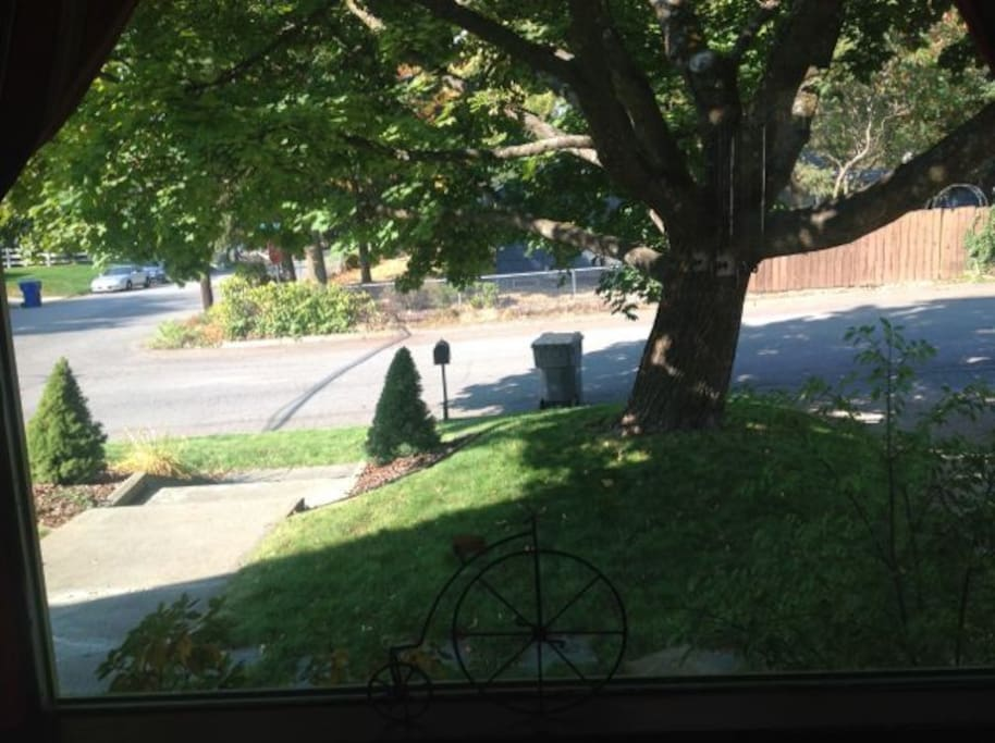 Looking out the living room window to front yard