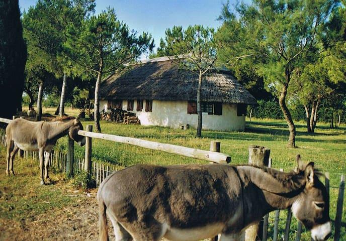 maison type cabane de gardian