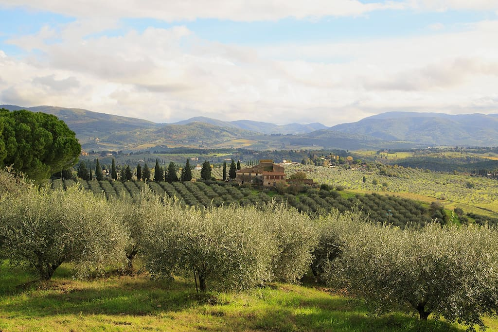 Views of olive groves