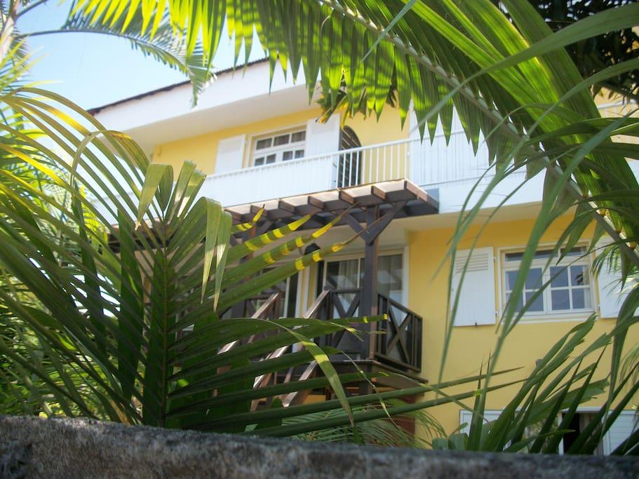 palmiers en façade