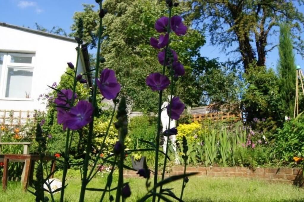 tranquil landscaped garden