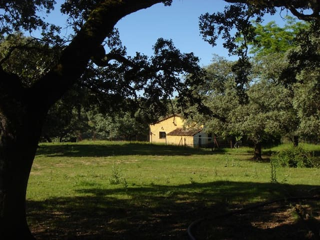 Casa en precioso enclave natural - Almonaster la Real - House