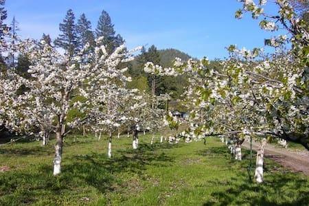 Orchard Retreat on the Lakeshore. - Bigfork