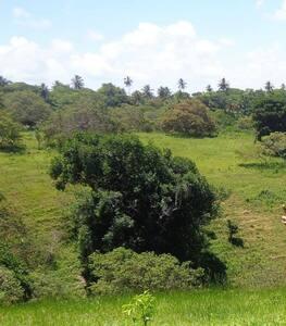 Sítio em Abrantes - Vilas do Abrantes
