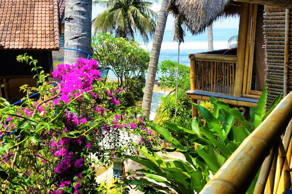 Beautiful bougainvillea and neighboring houses