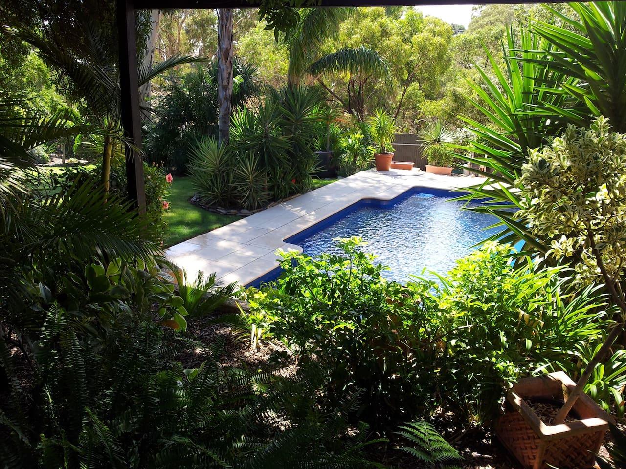 9 metre salt chlorinated pool in lush tropical grounds