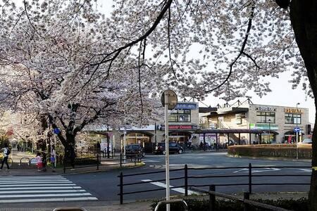 DOMUS MUSASHINO -Sakura View- - Apartment