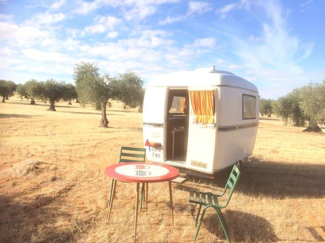 Vintage petit caravan in olive yard - Toledo - Kamp Karavanı/Karavan