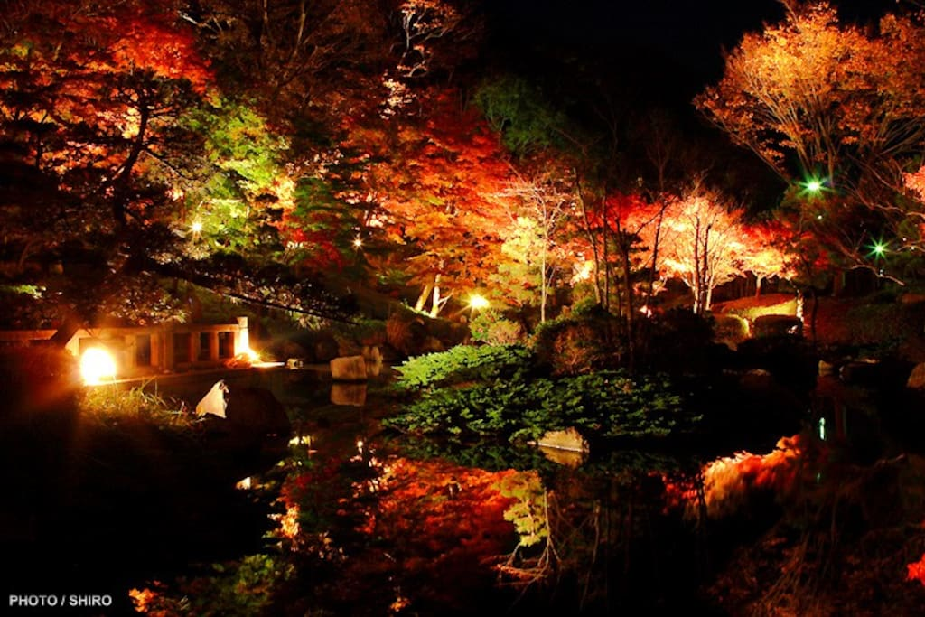 """紅葉ライトアップ (お隣の城山公園) 11/23日(水)~11/27日(日)5 minutes walk to """"Jyoyama Park""""."""