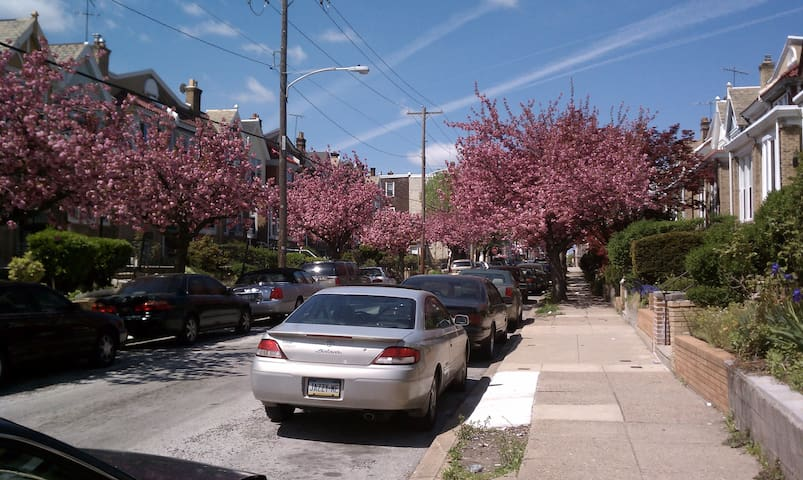 Tree lined block w friendly neighbors
